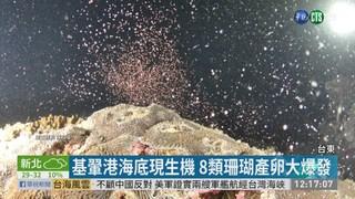 基翬港海底現生機 8類珊瑚產卵大爆發