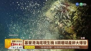 【台語新聞】基翬港海底現生機 8類珊瑚產卵大爆發