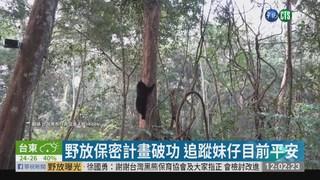媒體偷拍南安小熊野放 保育界怒了