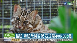 棲地毀.非法狩獵 保育類動物生存危機