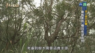 【華視新聞雜誌】深入達巴里蘭  魯凱家庭 種回希望森林