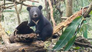南安小黑熊野放過程被揭露! 媒觀聲明:違反新聞倫理