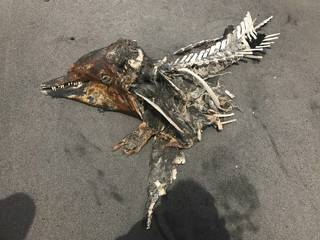 又有鯨豚擱淺?宜蘭發現爛鯨豚屍體