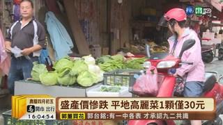 【台語新聞】變貴了! 高山高麗菜救市1顆賣200元