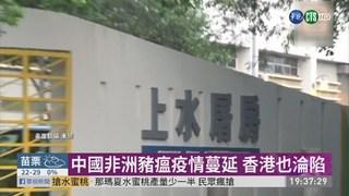 非洲豬瘟入侵香港! 銷毀6千頭豬隻