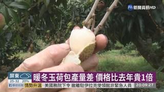 暖冬玉荷包產量差 台東荔枝農逆勢豐收