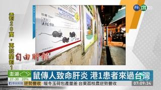 鼠傳人致命肝炎 港1患者來過台灣