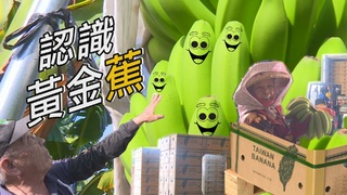 【放4大吃】一分鐘認識「烏龍種」黃金蕉-我台灣我蕉傲