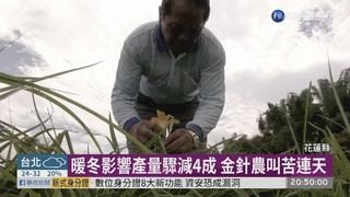 暖冬金針產量驟減4成 花蓮啟動補助