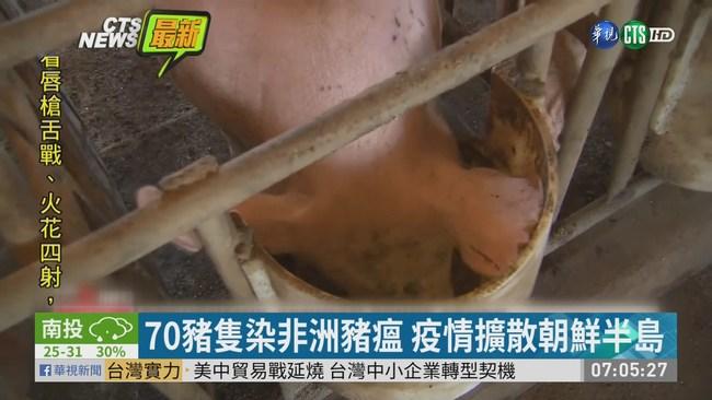 70豬隻染非洲豬瘟 疫情擴散北韓 | 華視新聞