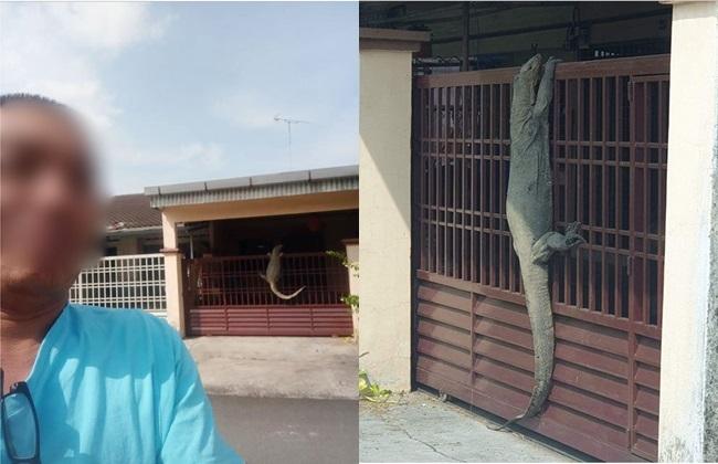 大蜥蜴闖家中攀爬大門 屋主玩自拍盼帶財 | 華視新聞