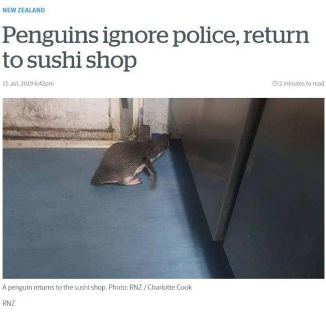 就愛壽司店!? 小藍企鵝被放回海中又跑來 | 華視新聞