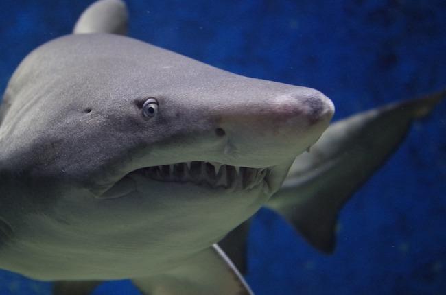 【影】大白鯊生死激戰曝光  身體幾乎斷成2截 | 華視新聞