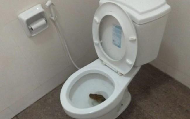 嚇瘋! 蹲廁所聽見「嘶嘶聲」 驚見4公尺蟒蛇躲馬桶   華視新聞
