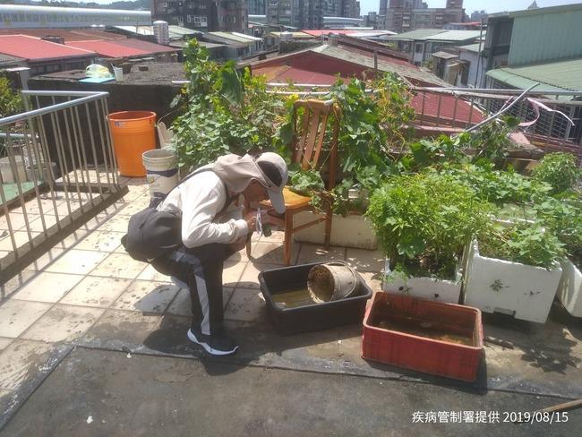 本土登革熱疫情延燒 新北、台南各增1例   華視新聞