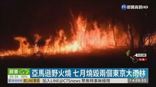 地球之肺失火了! 亞馬遜雨林生態浩劫   華視新聞