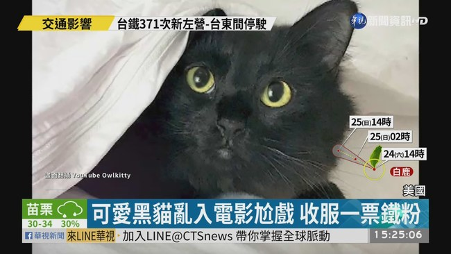 可愛黑貓亂入電影尬戲 收服一票鐵粉 | 華視新聞