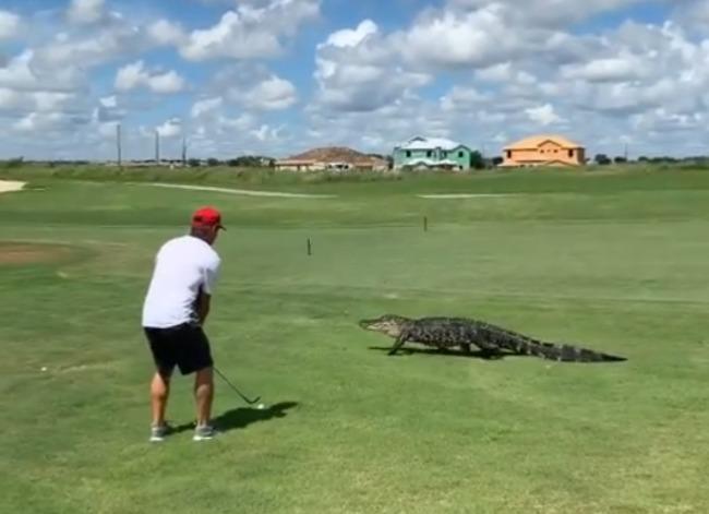 沒在怕! 鱷魚路過高爾夫球場 男子淡定揮桿 | 華視新聞