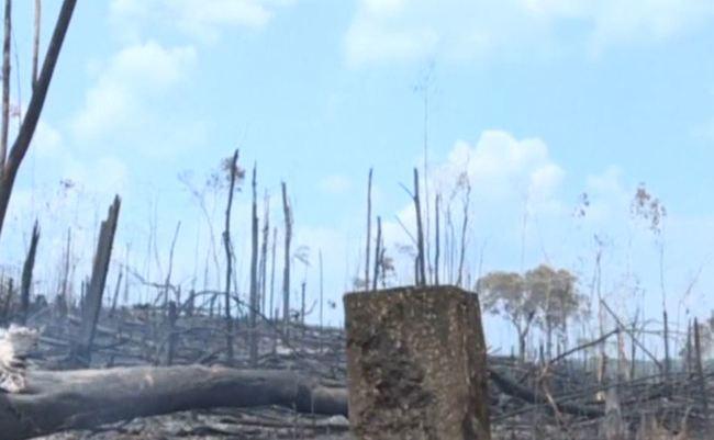 亞馬遜雨林燒掉80萬公頃 巴西官方出動軍機滅火   華視新聞