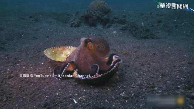 夢見吃螃蟹... 章魚睡夢中變彩色 | 華視新聞