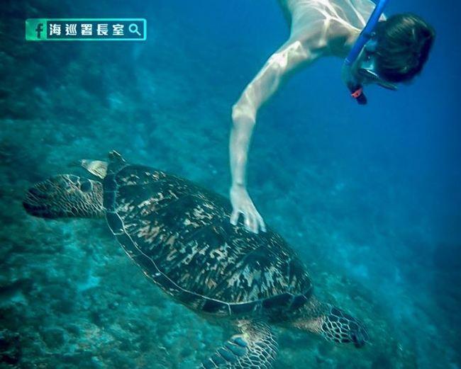 小琉球外籍遊客「摸海龜合影」觸法 最高罰30萬!   華視新聞