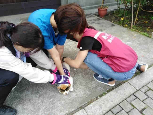 猴硐貓村年度疫苗補強 新北動保處聯手志工施打 | 華視新聞