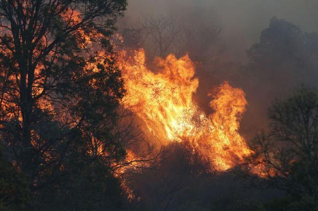 澳洲森林大火肆虐 雪梨空氣品質達「危險」等級 | 華視新聞