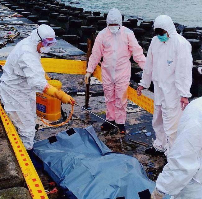 大甲海灘發現豬屍 腐化嚴重無法檢驗非洲豬瘟 | 華視新聞