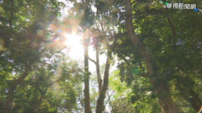 起床好冷! 太陽露臉中南部白天飆29度 | 華視新聞