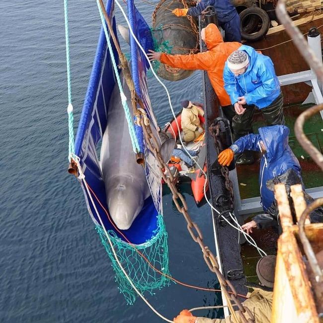 放生最後一批白鯨 俄國「鯨魚監獄」關門 | 華視新聞