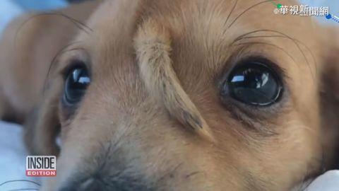 「臉上長尾巴」 小狗狗成網路寵兒