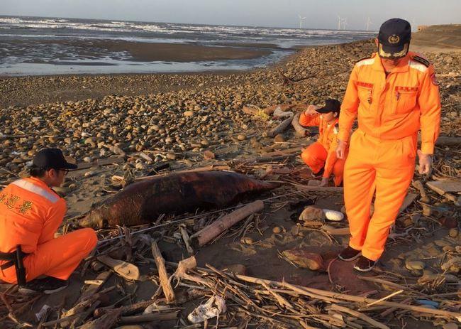 死亡擱淺!鯨豚媽媽為近岸生產卻誤食海漂垃圾.. | 華視新聞
