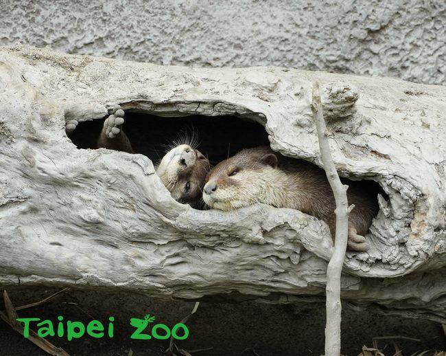 動物也要保暖!北市動物園強化熱帶動物保暖措施   華視新聞