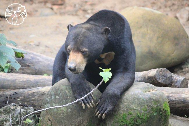 新竹動物園回來了!12歲以下兒童本週末免費入園 | 華視新聞