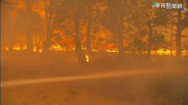 澳洲野火釀生態浩劫 近5億隻動物喪命 | 華視新聞