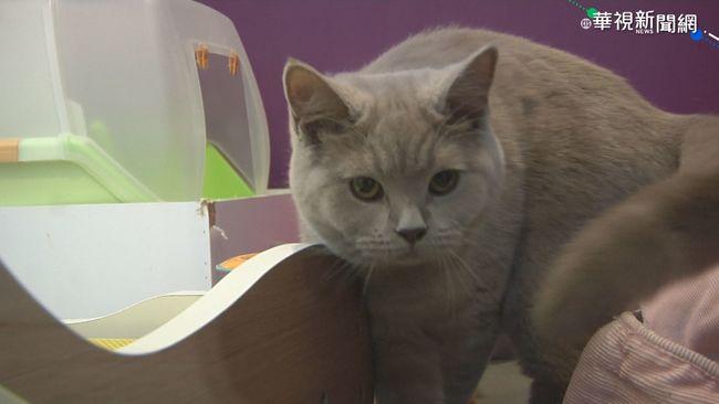 全球獨創 交大團隊研發貓砂檢測腎病   華視新聞