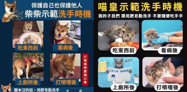 防堵武漢肺炎 超萌貓狗示範洗手正確時機 | 華視新聞