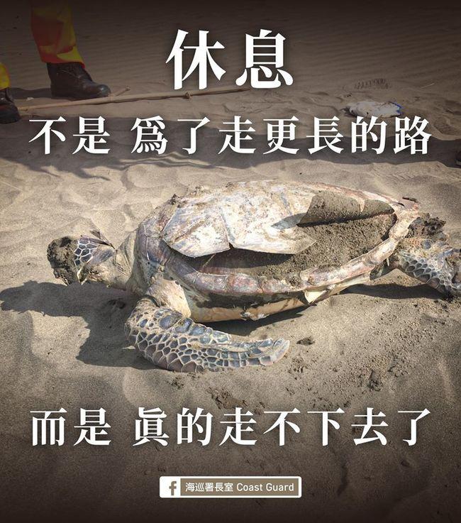 全台整天驚現9海龜屍 學者:恐是「被漁網纏絞」 | 華視新聞