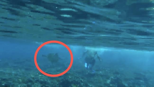 小琉球海龜又被騷擾!潛水客上岸遭逮 | 華視新聞