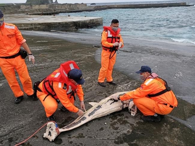 綠島出現小虎鯨屍體 海巡採樣後就地掩埋 | 華視新聞