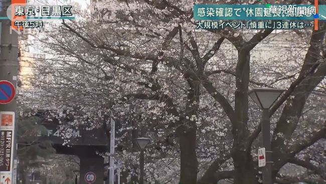 疫情重創日本賞櫻商機 損失近7百億 | 華視新聞