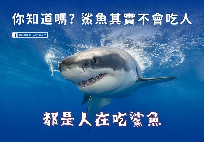 鯊魚會吃人好可怕?海巡署:都是人在吃鯊魚...   華視新聞