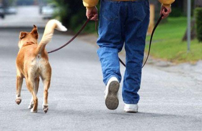 寵物後事被當流浪狗處理 北市環保局記大過嚴懲 | 華視新聞