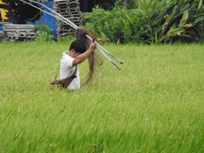 農民私架鳥網觸《野保法》 最高可罰30萬 | 華視新聞