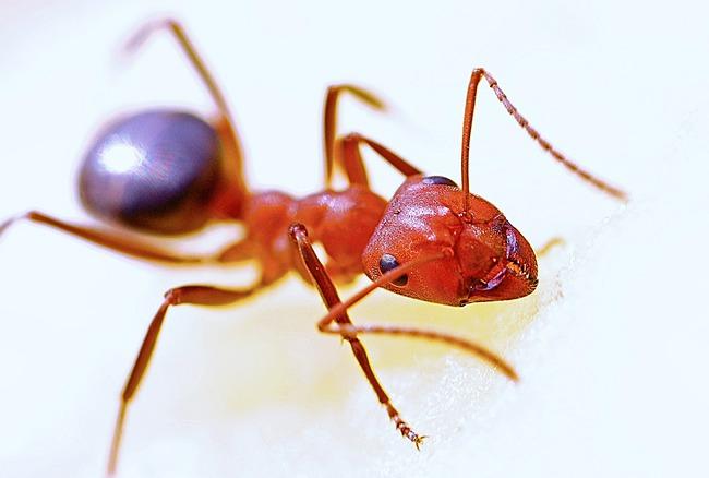 螞蟻狠咬一口 她痛苦哀嚎...下秒「當場昏迷倒地」 | 華視新聞