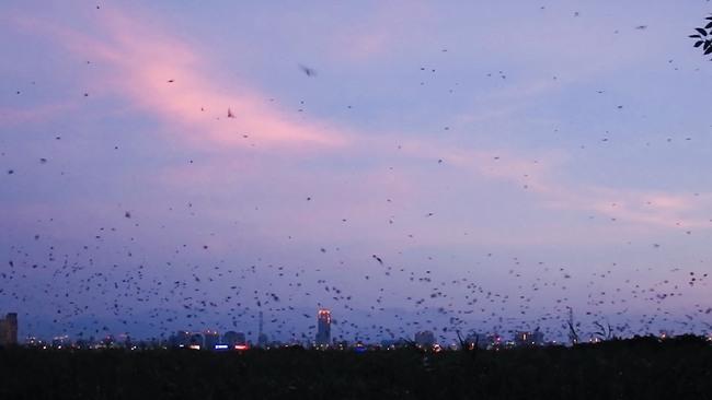 上萬燕群盤旋、俯衝! 五股濕地夏日賞燕季登場   華視新聞