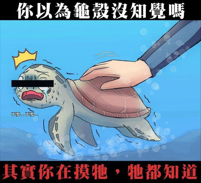海龜被摸有知覺!龜殼薄如寶特瓶「受傷也會痛」 | 華視新聞