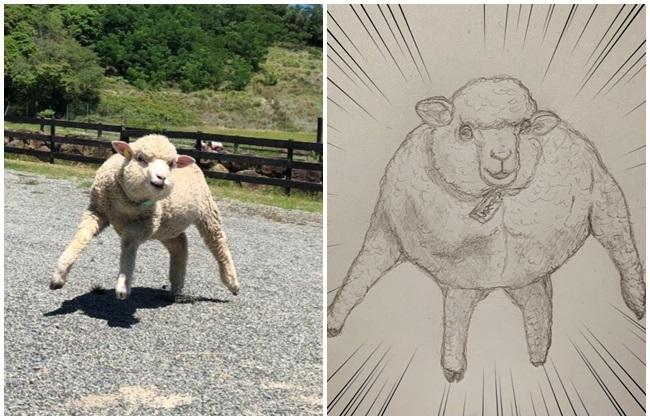 「超壯走路小綿羊」成日本新迷因! 動物迷因還有這些...   華視新聞