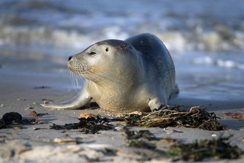 小孩想合照... 大人下秒竟持棍棒石頭圍毆海豹至昏迷