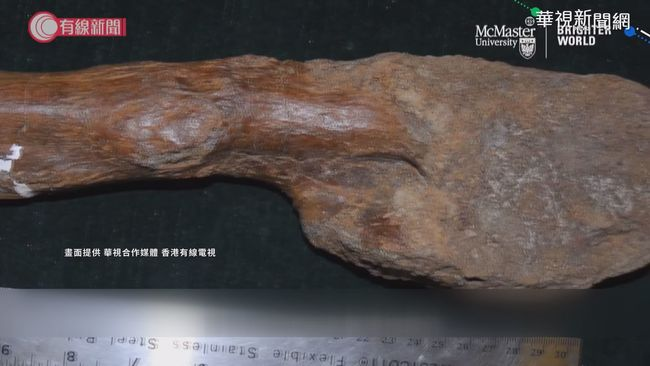 驗出骨肉瘤 7600萬年前恐龍已罹癌 | 華視新聞